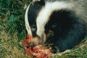 badgercontrolbournemouth2