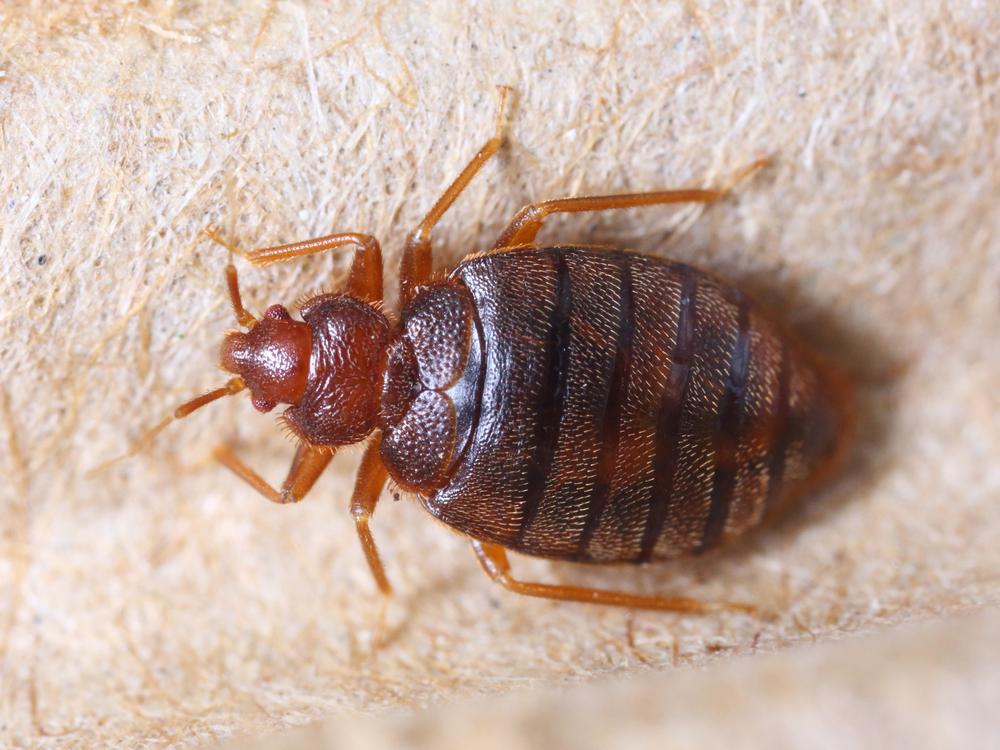 bedbugcontroldorset