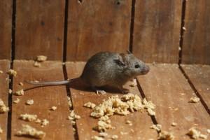 mousecontroldorset
