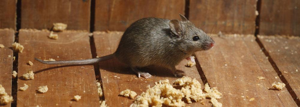 mousecontroldorset2
