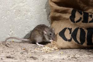 ratcontroldorset