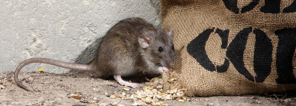 ratcontroldorset2