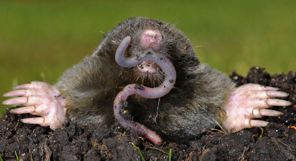 Dorset and Hampshire Mole Control